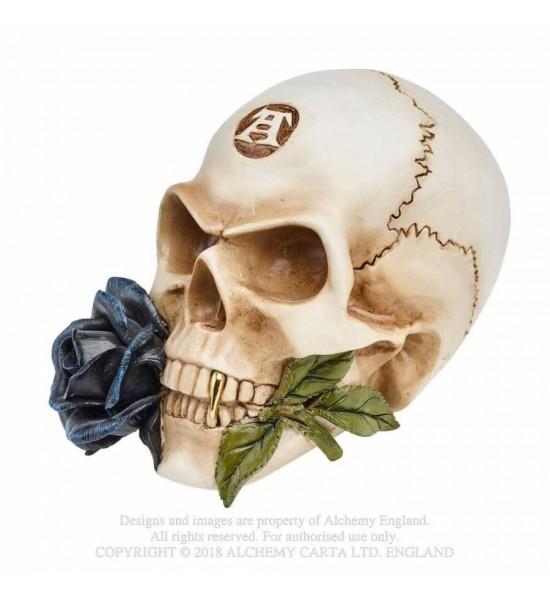Crâne Black rose