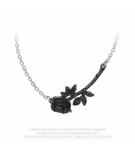 Black Rose Enigma